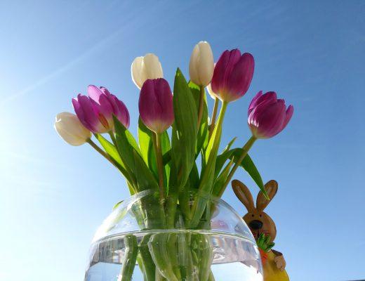 Tulpen zu Ostern 2018