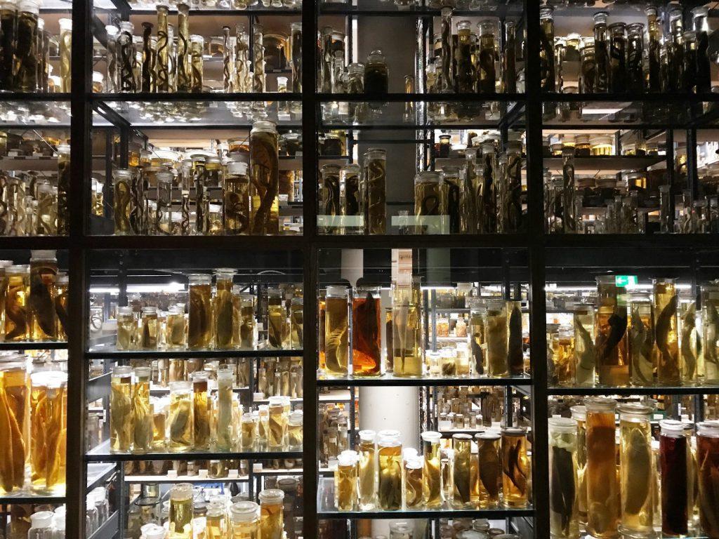 Nasssammlung im Naturkundemuseum Berlin